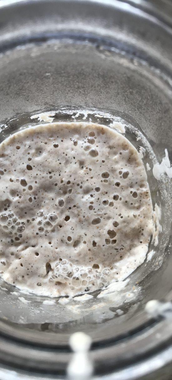 wild yeast day 2