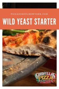 wild yeast starter